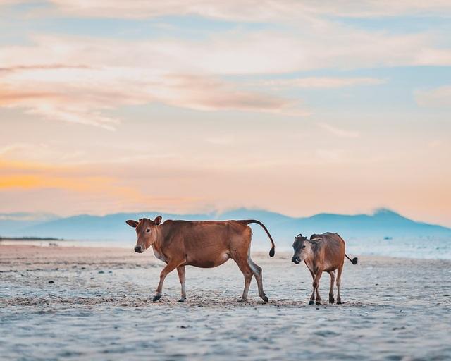 Ảnh đẹp nhất về động vật trong năm 2020 gọi tên nhiếp ảnh gia Việt Nam - 2