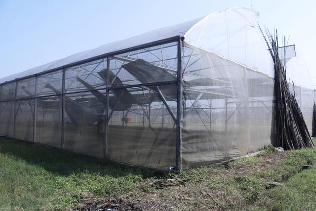 Nông dân xót xa cảnh hoang tàn của vựa rau lớn nhất Hà Tĩnh - 9