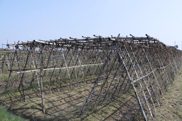 Nông dân xót xa cảnh hoang tàn của vựa rau lớn nhất Hà Tĩnh - 6