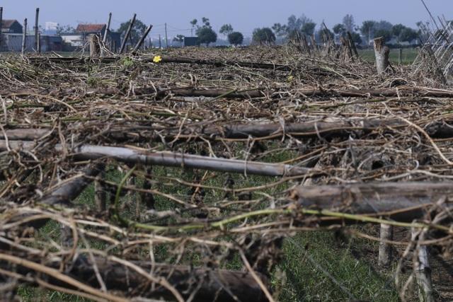 Nông dân xót xa cảnh hoang tàn của vựa rau lớn nhất Hà Tĩnh - 4