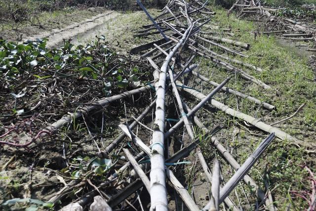 Nông dân xót xa cảnh hoang tàn của vựa rau lớn nhất Hà Tĩnh - 7