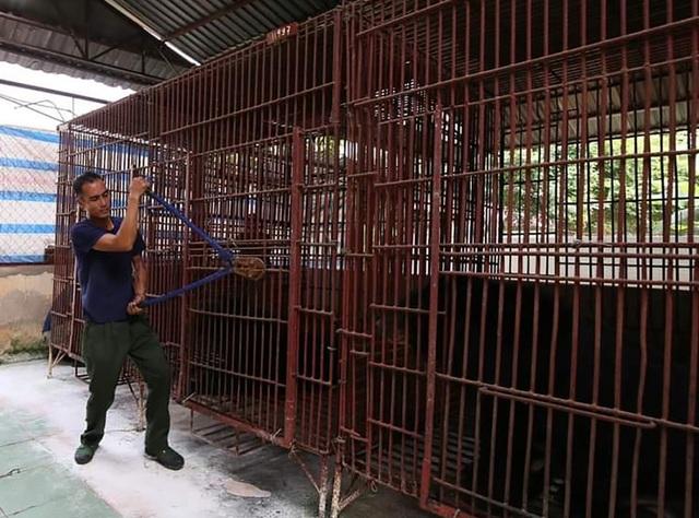 7 cá thể gấu được giải cứu sau gần 20 năm bị nuôi nhốt - 2