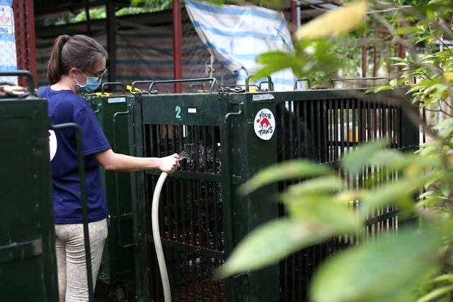 7 cá thể gấu được giải cứu sau gần 20 năm bị nuôi nhốt - 5