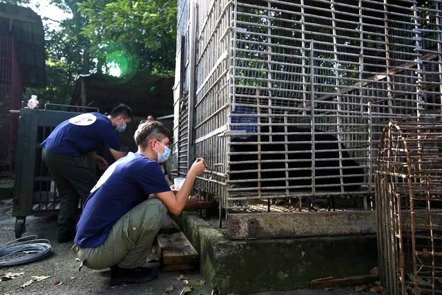 7 cá thể gấu được giải cứu sau gần 20 năm bị nuôi nhốt - 3