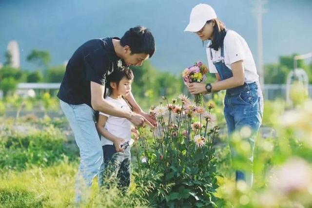 Bán nhà thành phố, vợ chồng về quê biến đất hoang thành vườn ngập hoa lá - 6