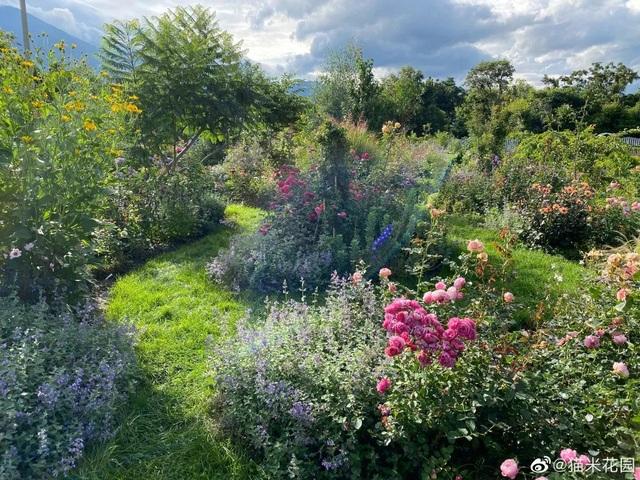 Bán nhà thành phố, vợ chồng về quê biến đất hoang thành vườn ngập hoa lá - 5