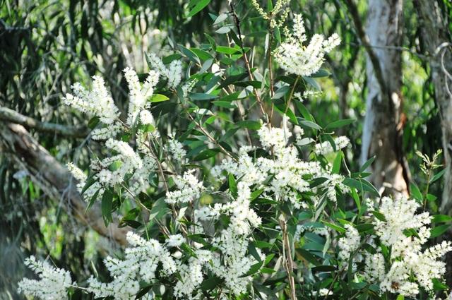 Rừng tràm Trà Sư - Tuyệt cảnh mùa nước nổi miền Tây - 7