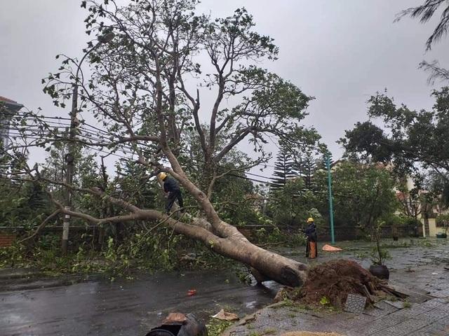 Đảo Cồn Cỏ hứng bão số 13 nặng nhất, nhà tốc mái, cây đổ ngổn ngang - 5