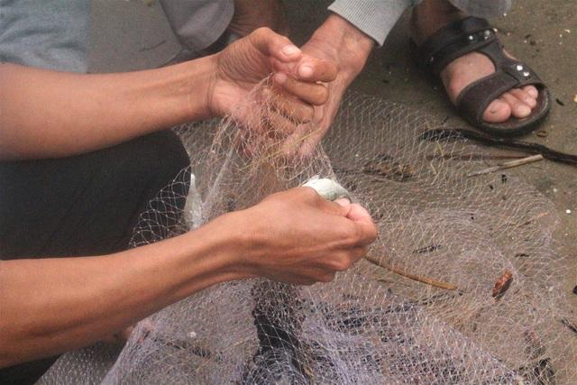 Bão tan, người dân hào hứng ra biển bắt cá... nước ngọt - 4
