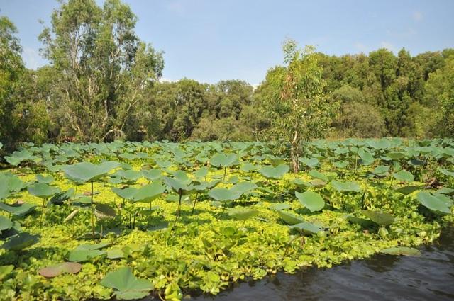 Rừng tràm Trà Sư - Tuyệt cảnh mùa nước nổi miền Tây - 5