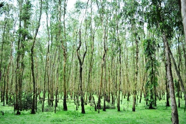Rừng tràm Trà Sư - Tuyệt cảnh mùa nước nổi miền Tây - 6