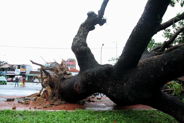 Tàu chìm, nhà sập, trường học tốc mái, cây xanh ngã đổ trong bão số 13 - 20