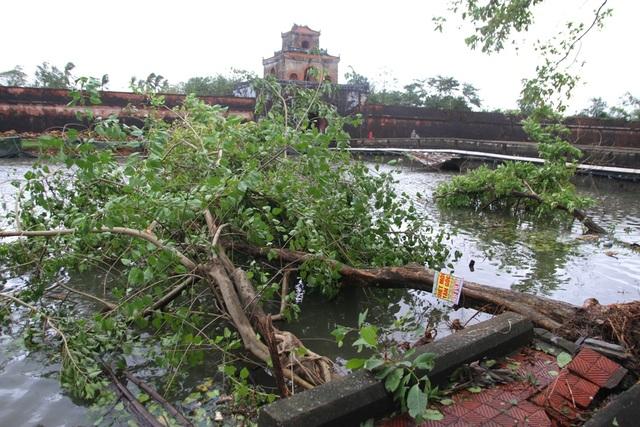 Tàu chìm, nhà sập, trường học tốc mái, cây xanh ngã đổ trong bão số 13 - 23