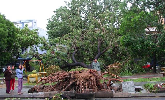 Tàu chìm, nhà sập, trường học tốc mái, cây xanh ngã đổ trong bão số 13 - 18