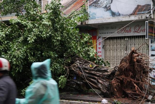 Tàu chìm, nhà sập, trường học tốc mái, cây xanh ngã đổ trong bão số 13 - 15