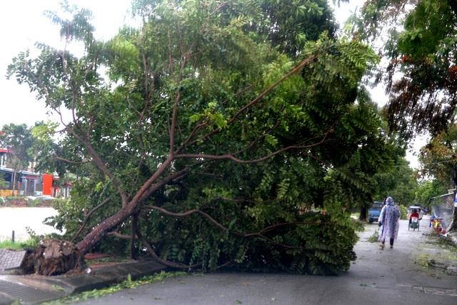Tàu chìm, nhà sập, trường học tốc mái, cây xanh ngã đổ trong bão số 13 - 24
