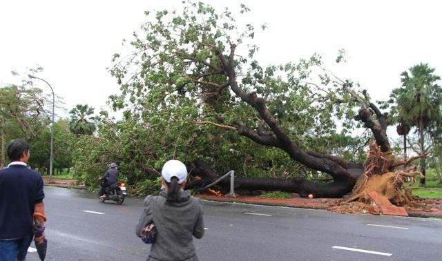 Tàu chìm, nhà sập, trường học tốc mái, cây xanh ngã đổ trong bão số 13 - 22