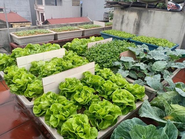 Ông bố đảm Hà Nội vác 2 tấn đất lên sân thượng trồng rau sạch cho vợ con - 3