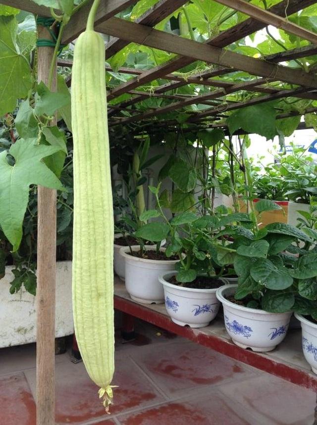 Ông bố đảm Hà Nội vác 2 tấn đất lên sân thượng trồng rau sạch cho vợ con - 5
