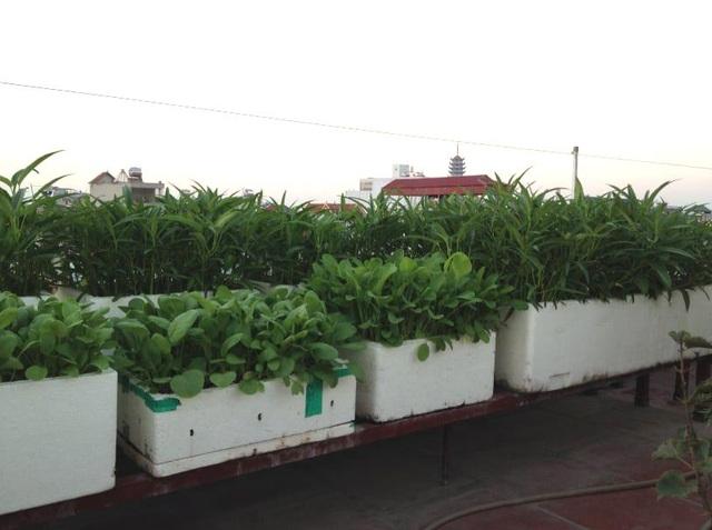 Ông bố đảm Hà Nội vác 2 tấn đất lên sân thượng trồng rau sạch cho vợ con - 6