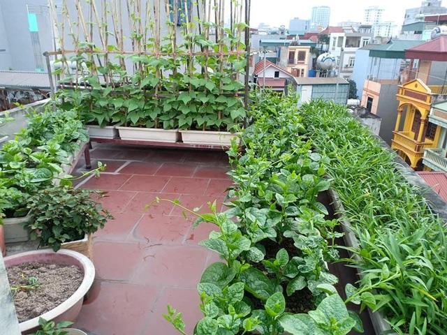 Ông bố đảm Hà Nội vác 2 tấn đất lên sân thượng trồng rau sạch cho vợ con - 8