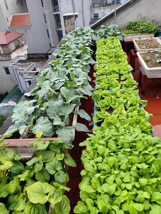 Ông bố đảm Hà Nội vác 2 tấn đất lên sân thượng trồng rau sạch cho vợ con - 10