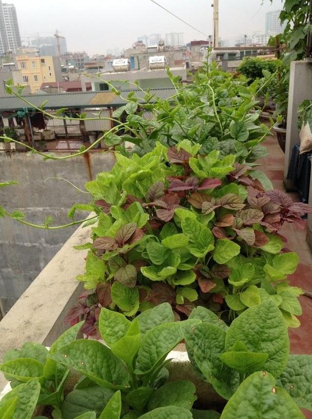 Ông bố đảm Hà Nội vác 2 tấn đất lên sân thượng trồng rau sạch cho vợ con - 14