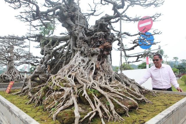 """Đã mắt với vẻ kỳ quái, hầm hố của """"siêu cây, trả bao nhiêu cũng không bán - 2"""