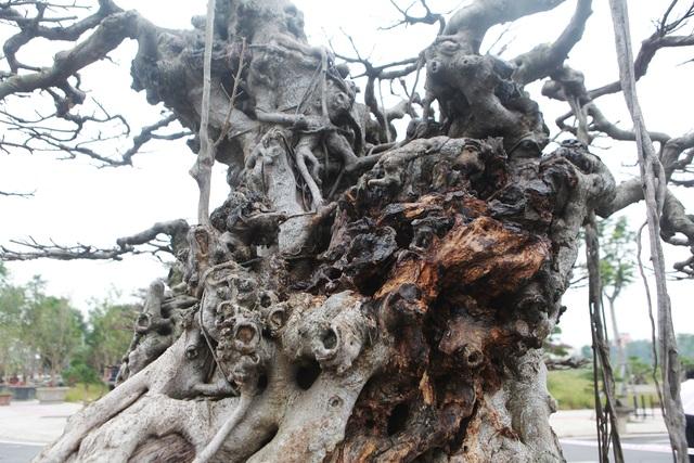 """Đã mắt với vẻ kỳ quái, hầm hố của """"siêu cây, trả bao nhiêu cũng không bán - 4"""