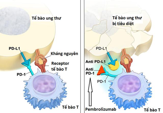 Các phương pháp điều trị nội khoa ung thư tiền liệt tuyến - 3