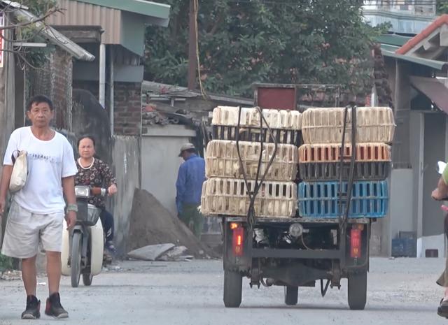 """Kinh hãi cảnh công nông """"ăn gà"""" lộng hành ở ngoại thành Hà Nội - 2"""