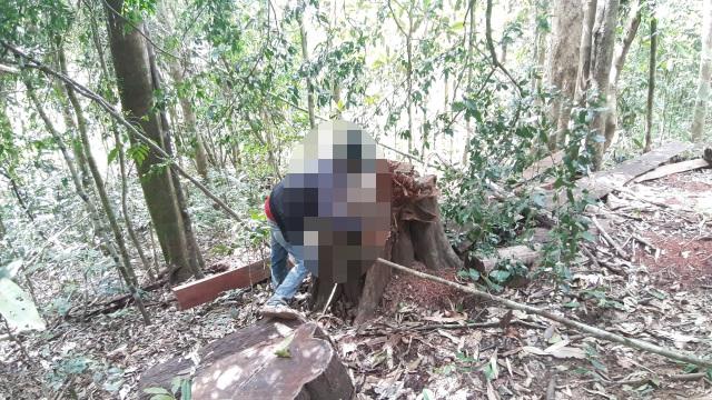 """La liệt cây đại thụ bị """"xẻ thịt"""" giữa rừng xanh, kiểm lâm không hề hay biết - 5"""