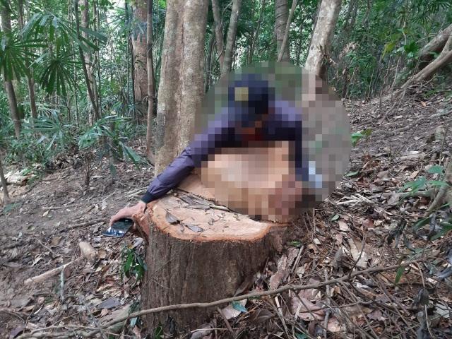 """La liệt cây đại thụ bị """"xẻ thịt"""" giữa rừng xanh, kiểm lâm không hề hay biết - 8"""