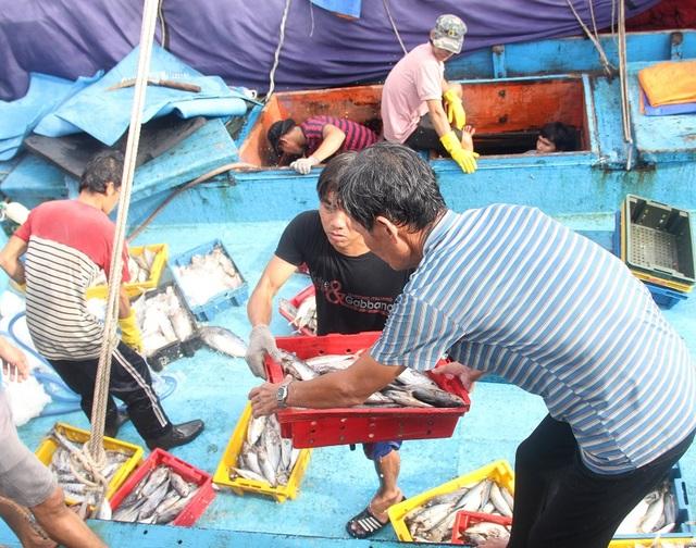 """Ngư dân Bình Định hối hả ra khơi kiếm """"lộc"""" biển, sau bão - 2"""