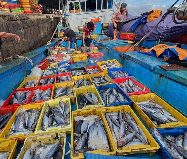 """Ngư dân Bình Định hối hả ra khơi kiếm """"lộc"""" biển, sau bão - 4"""