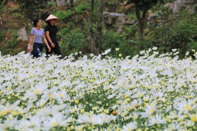 Chrysanthemum garden attracts thousands of people who come to take pictures and do not want to go back to Ninh Binh - 10