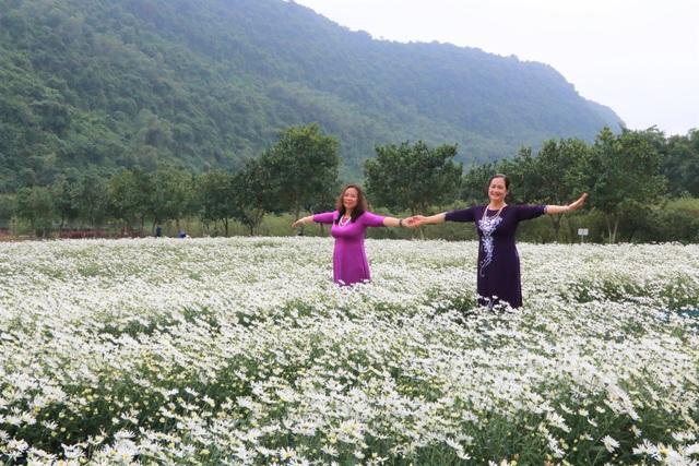 Vườn cúc họa mi nghìn người mê, đến chụp ảnh không muốn về ở Ninh Bình - 3