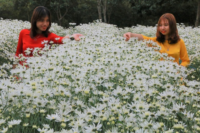 Chrysanthemum garden attracts thousands of people who come to take pictures and do not want to return to Ninh Binh - 13