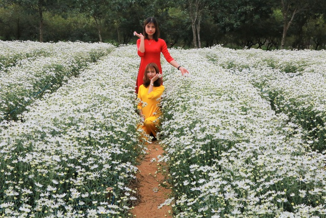 Chrysanthemum garden attracts thousands of people who come to take pictures and do not want to return to Ninh Binh - 2