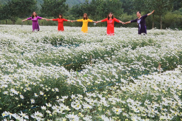 Chrysanthemum garden attracts thousands of people who come to take pictures and do not want to return to Ninh Binh - 1