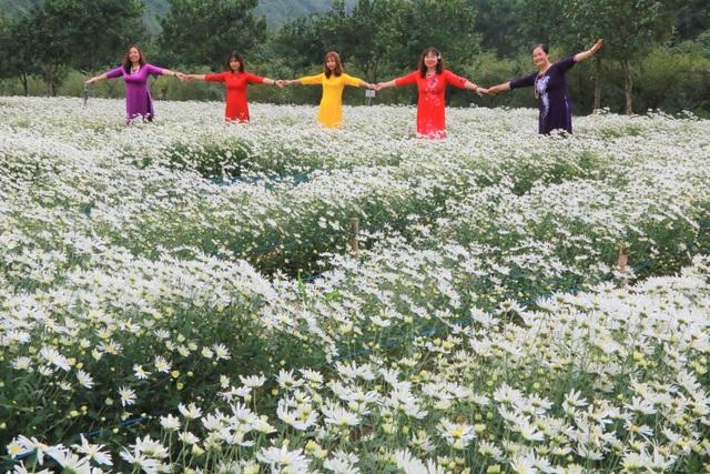 Vườn cúc họa mi nghìn người mê, đến chụp ảnh không muốn về ở Ninh Bình - 1