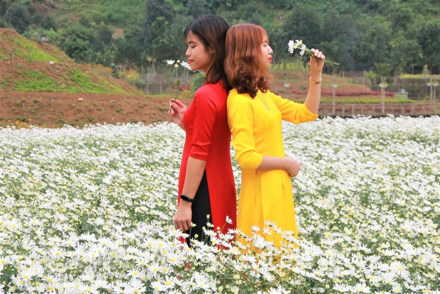 Chrysanthemum garden attracts thousands of people who love to take pictures and do not want to return to Ninh Binh - 7