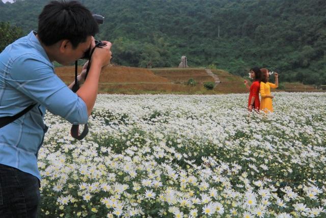 Vườn cúc họa mi nghìn người mê, đến chụp ảnh không muốn về ở Ninh Bình - 8