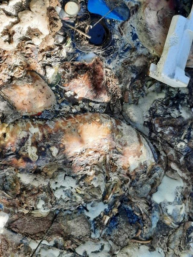Kinh hãi nhiều xác lợn chết nổi trên sông Hương, ngay gần lò mổ - 4