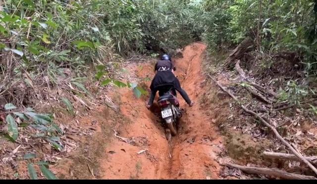 Tỉnh Gia Lai chỉ đạo nóng vụ la liệt cây đại thụ bị đốn hạ giữa rừng xanh - 2