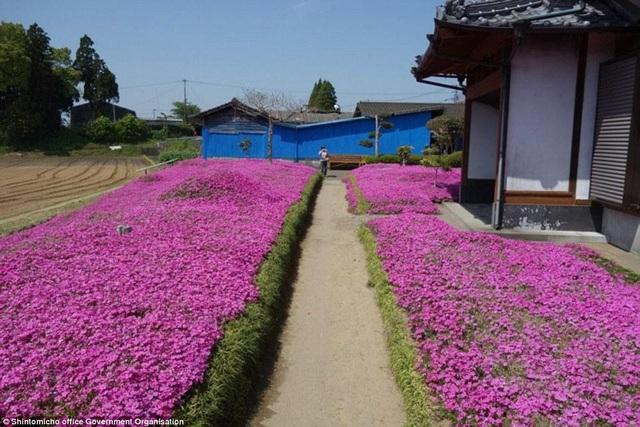 Vườn hoa đẹp như cổ tích của người đàn ông dành 10 năm trồng tặng vợ - 2