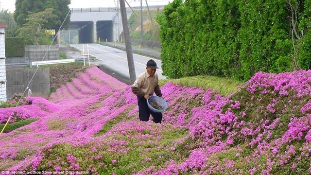 Vườn hoa đẹp như cổ tích của người đàn ông dành 10 năm trồng tặng vợ - 3