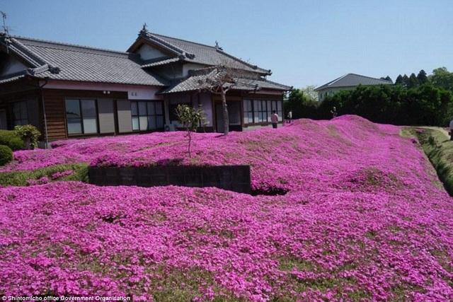 Vườn hoa đẹp như cổ tích của người đàn ông dành 10 năm trồng tặng vợ - 5