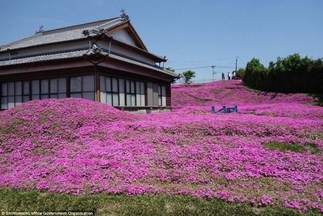 Vườn hoa đẹp như cổ tích của người đàn ông dành 10 năm trồng tặng vợ - 8