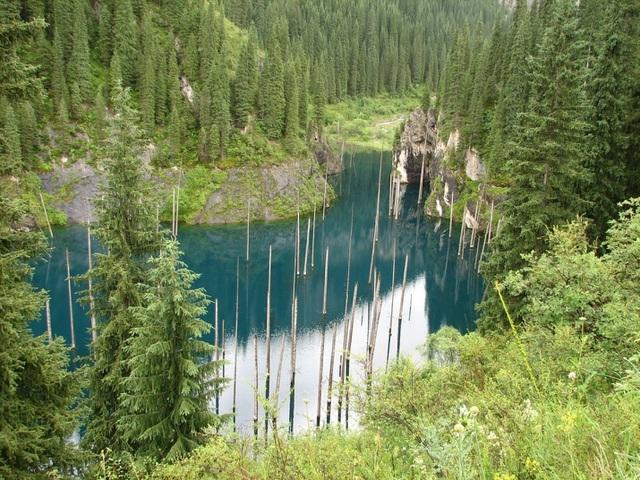 Kỳ lạ rừng cây mọc ngược từ dưới đáy hồ